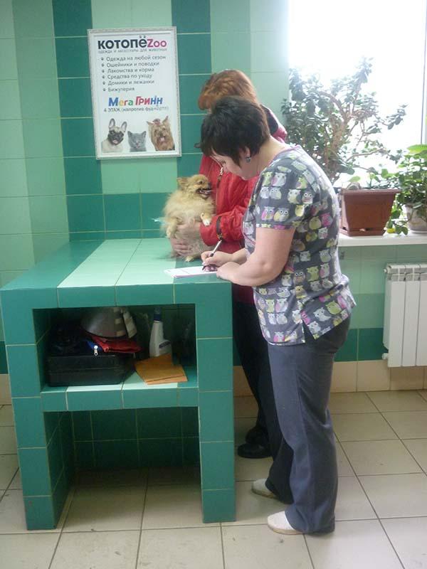 Зубная поликлиника невский проспект