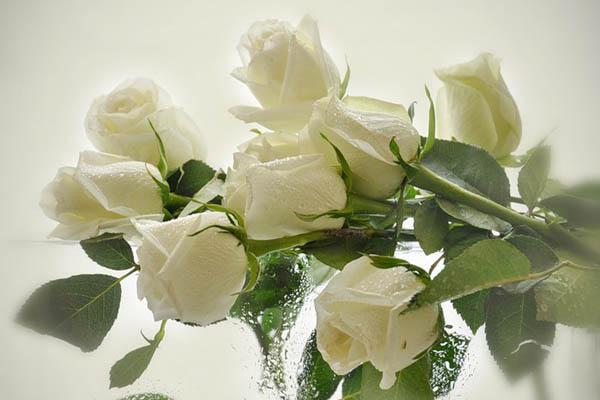 Белогорья цветы
